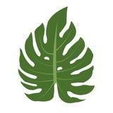 zielonej ikony ilustracyjny liść wektor Obrazy Royalty Free