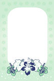 zielonej karty hibiskus Fotografia Stock