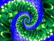 Zielonej marynarka wojenna kwiatu spirali fractal skutka wzoru abstrakcjonistyczny tło Kwiecisty ślimakowaty abstrakta wzoru frac Fotografia Royalty Free