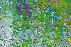 zielonej parszywej starej farby nierówna ściana Obraz Stock