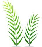 zielonej roślin tło białe Zdjęcia Stock