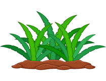 zielonej roślin tło białe Obrazy Stock