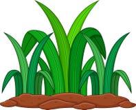 zielonej roślin tło białe Zdjęcie Stock
