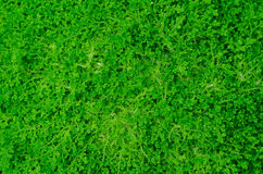 Zielonej rośliny ściana obraz stock