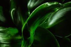 Zielonej rośliny depresji klucz obrazy stock