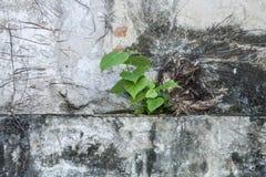 Zielonej rośliny dorośnięcie Obraz Stock