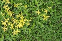 Zielonej rośliny dorośnięcie na zielonej trawie Fotografia Stock