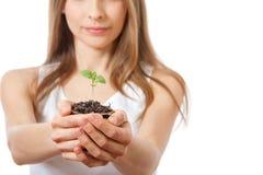 Zielonej rośliny flanca w żeńskiej ręce fotografia royalty free