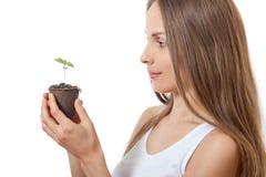 Zielonej rośliny flanca w żeńskiej ręce obraz stock