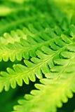 Zielonej rośliny liście Zdjęcia Royalty Free