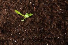 zielonej rośliny rozsada zdjęcie stock