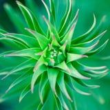 Zielonej ro?liny spirala nad zamazanym t?em, abstrakcjonistyczny poj?cie zdjęcie royalty free
