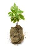 zielonej rośliny ziemi potomstwa Obrazy Stock
