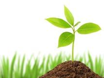 zielonej rośliny potomstwa Obrazy Stock