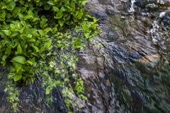 Zielonej ro?liny wodnej niedaleka rzeka, porcelana obraz stock