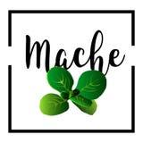 Zielonej sałatki liście odizolowywający na białym tle Obraz Stock
