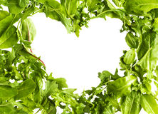 Zielonej sałaty sałatkowi liście odizolowywający na białym tle Obraz Stock