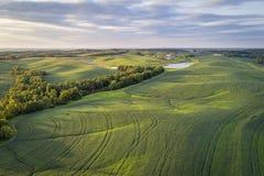 Zielonej soi pola w Missouri widok z lotu ptaka zdjęcia royalty free