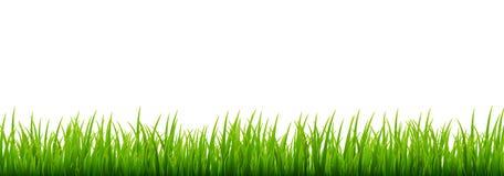 Zielonej trawy łąki granicy wektoru wzór Wiosny lub lato rośliny pola gazon pojedynczy białe tło trawy royalty ilustracja