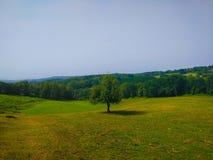 Zielonej trawy łąka z drzewem w środku Camino de Santiago Primitivo obrazy stock