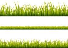 Zielonej trawy łąki granicy wektoru wzór Wiosny lub lato rośliny pola gazon pojedynczy białe tło trawy ilustracji