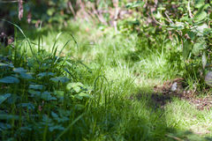 Zielonej trawy ślad przy górami zbliżenie Fotografia Royalty Free