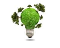 Zielonej trawy żarówka odizolowywająca Zdjęcie Stock