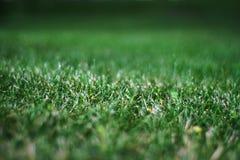 Zielonej trawy anglików gazon obrazy royalty free