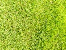 Zielonej trawy bezszwowa tekstura Zdjęcia Stock