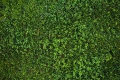 Zielonej trawy bezszwowa tekstura abstrakcjonistyczny tła miasta trawy zieleni gazonu parka tekstury widok Obraz Royalty Free