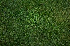 Zielonej trawy bezszwowa tekstura abstrakcjonistyczny tła miasta trawy zieleni gazonu parka tekstury widok Obrazy Stock