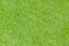 Zielonej trawy bezszwowa tekstura Bezszwowy w tylko horyzontalnych dimens Zdjęcia Royalty Free