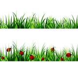 Zielonej trawy bezszwowy set Zdjęcie Stock