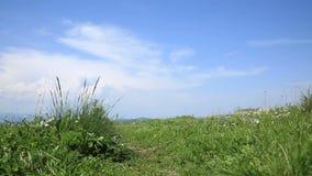 Zielonej trawy chodzenie w wiatrze zbiory wideo