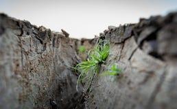 Zielonej trawy dorośnięcie między krakingową ziemską skorupą fotografia stock