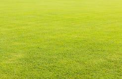 Zielonej trawy gazon dla tła Obrazy Stock
