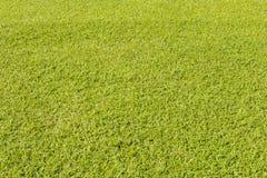 Zielonej trawy gazon dla tła obrazy royalty free