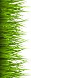 Zielonej trawy gazon odizolowywający na bielu Kwiecista eco natura royalty ilustracja