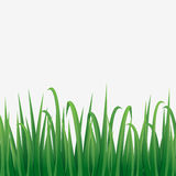 Zielonej trawy granica z białym tłem Obraz Stock