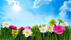 Zielonej trawy kwiatu rama Fotografia Stock