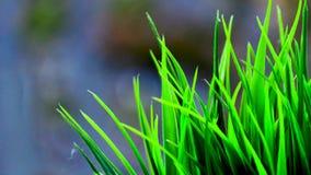 Zielonej trawy liści zamknięty up zdjęcie wideo