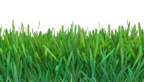 Zielonej trawy natura ilustracji