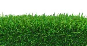 Zielonej trawy natura royalty ilustracja