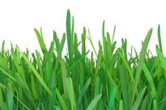 Zielonej trawy natura zasadza gazon 3d odpłaca się naturalnego tło ilustracji