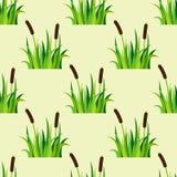 Zielonej trawy natury projekta bezszwowa deseniowa wektorowa ilustracja r zielarskiego rolnictwo natury tło Fotografia Royalty Free