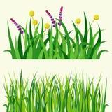 Zielonej trawy natury projekta elementów wektorowa ilustracja odizolowywająca r rolnictwo natury tło Zdjęcia Royalty Free