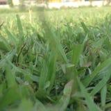 Zielonej trawy obrazek Zdjęcia Stock