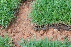 Zielonej trawy płytki. makro-. Fotografia Royalty Free