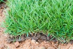 Zielonej trawy płytki. makro-. Obrazy Royalty Free