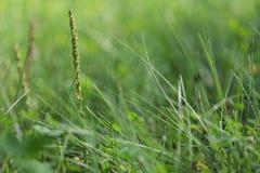 Zielonej trawy pola flanca i lato zdjęcia stock